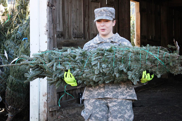 Trees For Troops NC Christmas Trees Image